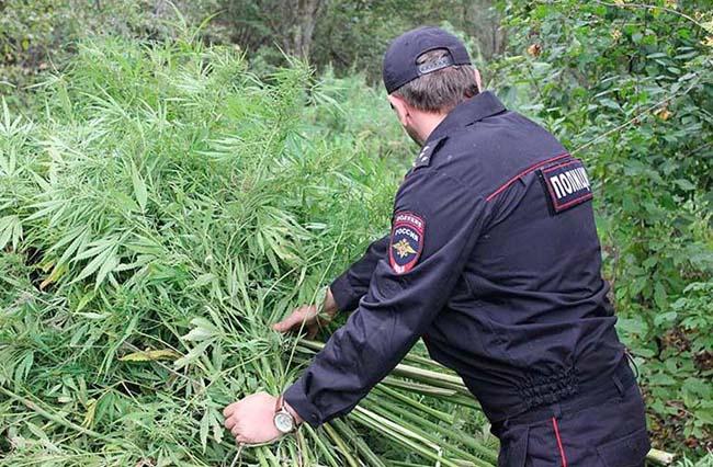 Плантации наркосодержащих растений будут взяты под охрану
